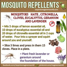 Irritation from mosquito bites can be irritating. The best way to deal with mosquito bites is to prevent them in the first place with natural repellents. Citronella Essential Oil, Eucalyptus Essential Oil, Lemon Essential Oils, Doterra, Best Mosquito Repellent, Insect Repellent, Fly Repellant, Diy Pest Control, Weed Control