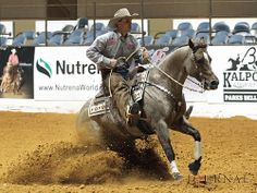 Nabisco Roan | Flickr - Photo Sharing! Barrel Racing Saddles, Barrel Racing Horses, Reining Horses, Grulla Horse, Breyer Horses, Horse Halters, Horse Saddles, Rodeo Events, Cutting Horses