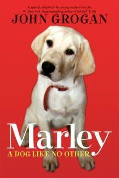 """A love story about a newlywed couple who decide to get a dog and the """"bargain"""" Labrador retriever they choose."""