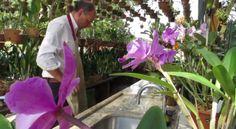 Orquídeas: conheça Luís Lima, um colecionador que tem mais de 4 mil orquídeas em casa.