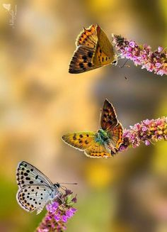 Butterfly by Linda Miranda on 500px