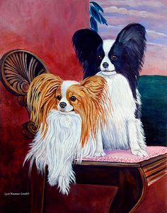 Elegance - Papillon Dog by Lyn Cook