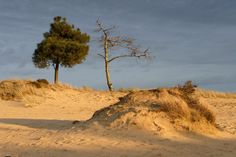 Routes in het Drents-Friese Wold Netherlands, Paths, Grand Canyon, Trail, Hiking, Country Roads, Nature, Outdoor, Beautiful