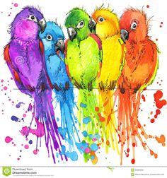 Funny Colorful Parrots With Watercolor Splash Textured - Download From Over 66 Million High Quality Stock Photos, Images, Vectors. Sign up for FREE today. Image: 55064552