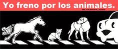 respetemos nuestro animales en carretera