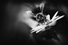 Natur Foto schwarz-weiss