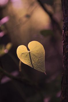 Find images and videos about photography, nature and heart on We Heart It - the app to get lost in what you love. Heart In Nature, Heart Art, I Love Heart, My Heart, Lonely Heart, Jolie Photo, Love Is All, Bokeh, Mother Nature