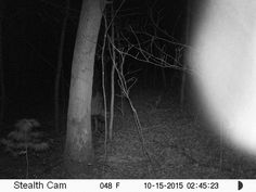https://www.reddit.com/r/Paranormal/comments/65vymr/whats_the_scariest_thing_youve_caught_on_your/dgemkfq/?st=j2mfp0mm&sh=a0bfa2f4