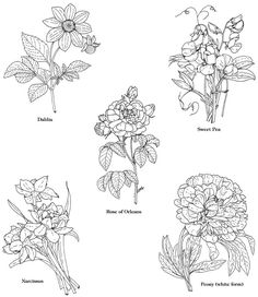 More flowers- sweet pea, dahlia, Rose of Orleans, etc.