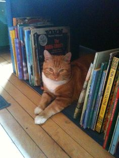A well read cat                                             #pets #animals #cats #lolcats