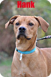 Albemarle, NC - Redtick Coonhound/Labrador Retriever Mix. Meet Hank, a dog for adoption. http://www.adoptapet.com/pet/14260587-albemarle-north-carolina-redtick-coonhound-mix