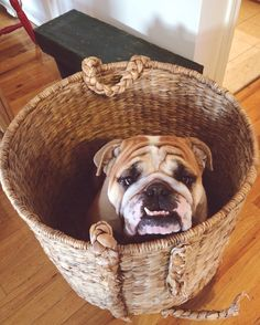 "duncanthebulldog: ""Now how do I get out of here? """