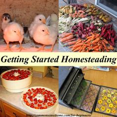 """Get Started Homesteading - Over 20 Posts to Help You Become More Self-Reliant, Plus FREE E-book """"Common Sense Homesteading 101:  7 Steps to Become more Self-Reliant Now"""" with subscription"""