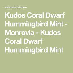 Kudos Coral Dwarf Hummingbird Mint - Monrovia - Kudos Coral Dwarf Hummingbird Mint