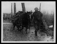 medieval war horse breeds - Google Search