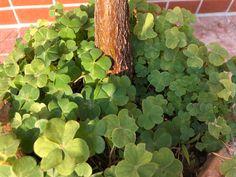 Startseite / Twitter Kraut, Twitter, Photos, Manhattan, Plants, Replant, Shape, Lawn And Garden, Pictures