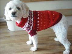 Ravelry: 102-42 Knitted dog coat in Karisma with traditional Norwegian pattern pattern by DROPS design