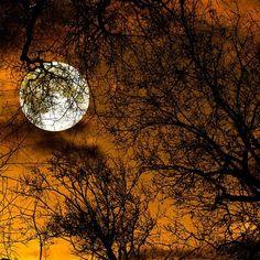 A Perfect Halloween Moon