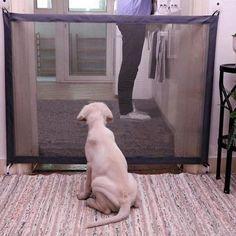 Dog Gate Guard