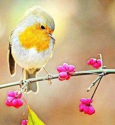 <3 Robin Redbreast, Purple Garden, Love Scenes, Bible Scriptures, Flocking, Bird Feathers, Animal Photography, Birds, Nature