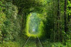 nature-tunnel-5