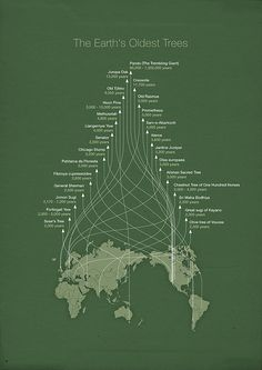 The world's oldest trees in an infographic by Michael Paukner, master of esoteric visualization. Pair with the world's oldest trees in photos. (↬ this isn't happiness) Information Design, Information Graphics, By Any Means Necessary, Old Trees, Grafik Design, Big Data, Data Visualization, Science And Nature, Knowledge