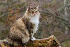 Paws   –  12 amazing cats that cost a fortune