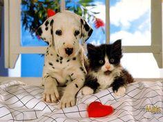 ... porque amamos animais ... beijinhos ♥