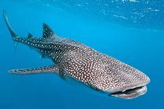 morske živali - Iskanje Google