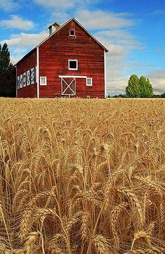 Amazing Bams Farms Photo (135)