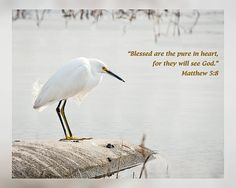 "From Daily Scripture Project by artist Dawn Currie - Beatitudes series: ""Blessed are the pure in heart, for they will see God."" Matthew 5:8 #praiseGod  Photograph of a singular Snowy Egret at the Ritch Grissom Memorial Wetlands, also known as the Viera Wetlands. #DailyScripture"