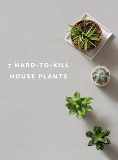 The Easiest Plants to Keep Alive? Try These 7 Hard-to-Kill House Plants! The Easiest Plants to Keep Alive? Try These 7 Hard-to-Kill House Plants!
