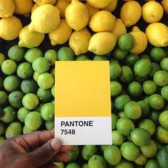 Pantone Project: Colori Pantone nella Vita Reale di Paul Octavious PANTONE 7548