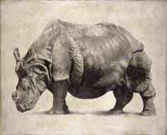 Indian Rhinoceros II / Rhinoceros unicornis / 2007 / 80 x 100 cm / Pencil on panel