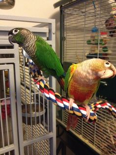A green cheek and a... jenday conure I believe. Cute birds, lovely big cages!