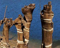 Las figuras ocultas del Miño. Troncos pintados por el agua