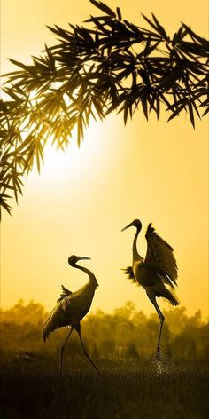 Oh to be able to be part of this type of nature. To interact with nature in a beautiful way. Pretty Birds, Love Birds, Beautiful Birds, Beautiful World, Animals Beautiful, Cute Animals, Silhouettes, Foto Poster, Tier Fotos