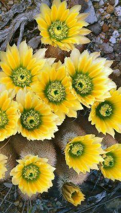 Home Garden Design, Home And Garden, Cactus, Beautiful Landscapes, Herbalism, Fruit, Flowers, Gardening, Plants