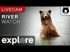 River Watch - Katmai National Park, Alaska powered by EXPLORE.org - YouTube