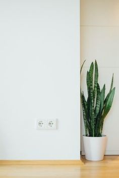 Snake plant: beautify your office with snake plants + plant care tips & tricks Easy Plants To Grow, Low Lights, Plant Pictures, Plant Images, Houseplants Low Light, Best Indoor Plants, Easy House Plants, Interior Pictures