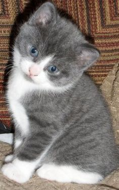 When our cat was a kitten...cute...peed everywhere ...but very cute.