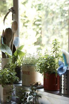 Small, Slow-Growing Indoor Plants for Windowsills