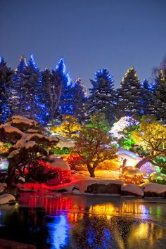 Holiday Road Trip: Blossoms of Lights at the Denver Botanic Gardens. Welcome to Colorado! Oh The Places You'll Go, Cool Places To Visit, Places To Travel, Travel Destinations, Beautiful World, Beautiful Places, Amazing Places, Le Colorado, Winter In Colorado