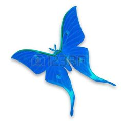 butterfly background: Blue moth butterfly isolated on white background