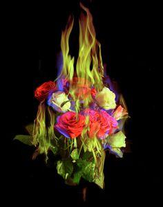 Mat Collishaw , Burning Flowers , ca. Rock Flowers, Flowers Nature, Burning Flowers, Burning Rose, Fire Photography, World Photography, Photography Ideas, Flower Close Up, Ideas