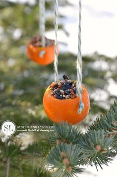 Making birdfeeders out of oranges. Did this for winter solstice and loved it! Will definitely do it again.