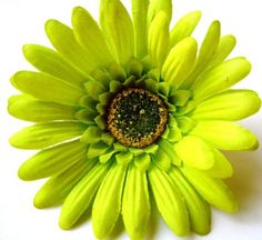 Items similar to Gerbera Glamour - Lime Green Gerbera Daisy Hair Flower - Made to order as a comb, clip or barrette on Etsy Nightmare Before Christmas Tattoo, Gerber Daisies, Dress Makeup, Gerbera, Shades Of Green, I Tattoo, Green Colors, The Dreamers, Daisy