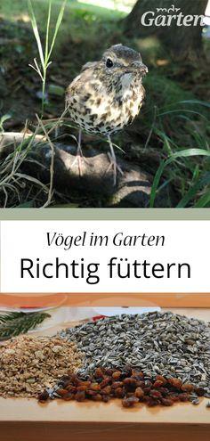 Mdr Garten, Bird, Animals, Insects, Plants, Sunflower Seeds, Kinds Of Birds, Bird Food, Animales