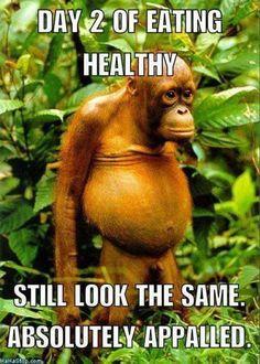 Funny Diet Memes, Diet Humor, Memes Humor, Funny Humor, Funny Stuff, Life Memes, Fat Memes, Diet Jokes, Hilarious Memes