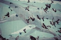 Pigeons & Whales  San Francisco California by ErinDrewitz on Etsy, $25.00